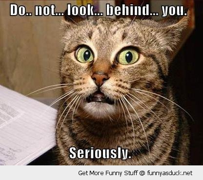 do not look behind scared shocked cat animal lolcat funny pics pictures pic picture image photo images photos lol