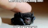 stop touching me baby bat i am night animal cute funny pics pictures pic picture image photo images photos lol