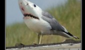 doom animal photoshop shark seagull bird attack funny pics pictures pic picture image photo images photos lol