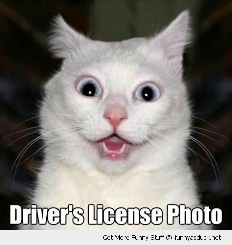 drivers license cat funny face dumb shocked lolcat animal funny pics pictures pic picture image photo images photos lol