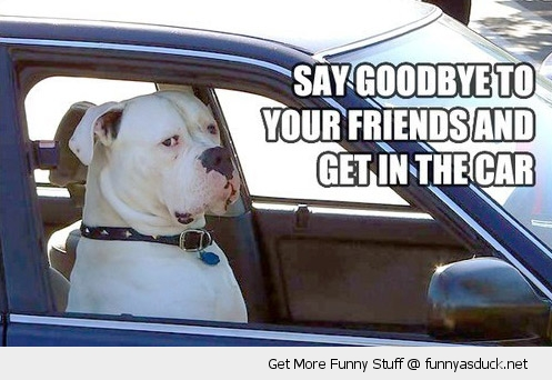dog driving car say goodbye friends get in animal grumpy funny pics pictures pic picture image photo images photos lol