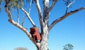 drunk piano in tree get out go home funny pics pictures pic picture image photo images photos lol