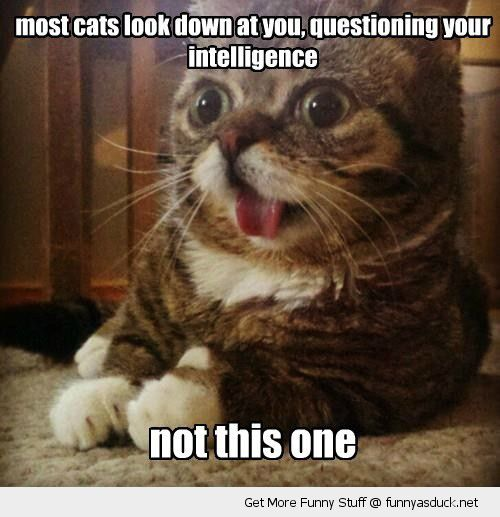 dumb cat animal lolcat look down question intelligence not this one funny pics pictures pic picture image photo images photos lol