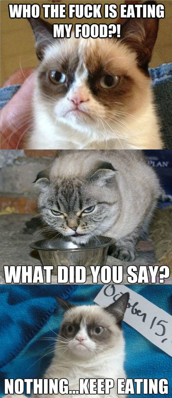 grumpy angry cat eating my food lolcat animals funny pics pictures pic picture image photo images photos lol