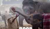 boop head man elephant animal trunk india cute funny pics pictures pic picture image photo images photos lol
