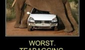 worst teabagging ever elephant car truck safari animal funny pics pictures pic picture image photo images photos lol