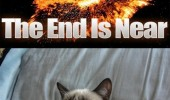 end is near earth exploding angry grumpy cat animal good funny pics pictures pic picture image photo images photos lol