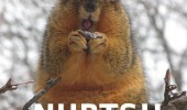 ermahgerd nurts happy squirrel animal eating nut sitting tree snow funny pics pictures pic picture image photo images photos lol