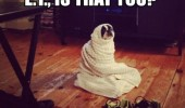 et is that you dog wrapped blanket animal cute funny pics pictures pic picture image photo images photos lol