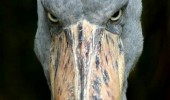 evil stork bird eat babies deliver baby animal funny pics pictures pic picture image photo images photos lol