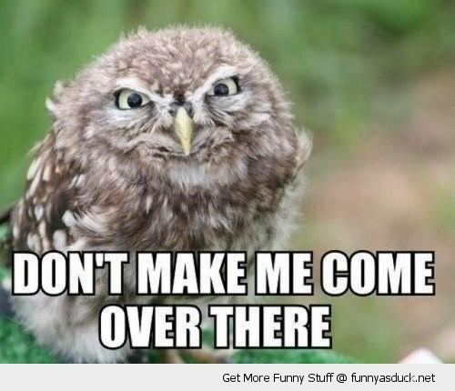 angry owl bird animal come over there evil funny pics pictures pic picture image photo images photos lol