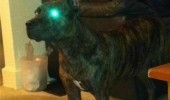 light eye green dog evil defense mode guard animal funny pics pictures pic picture image photo images photos lol