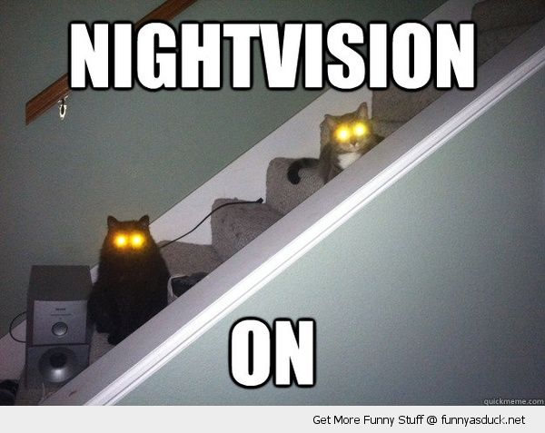 nightvision on cats animals yellow glowing eyes dark stairs funny pics pictures pic picture image photo images photos lol