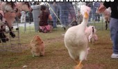never be this fabulous duck bird animal gay camp chicken funny pics pictures pic picture image photo images photos lol