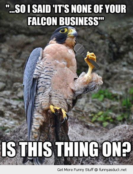 falcon bird telling joke pun animal microphone business funny pics pictures pic picture image photo images photos lol