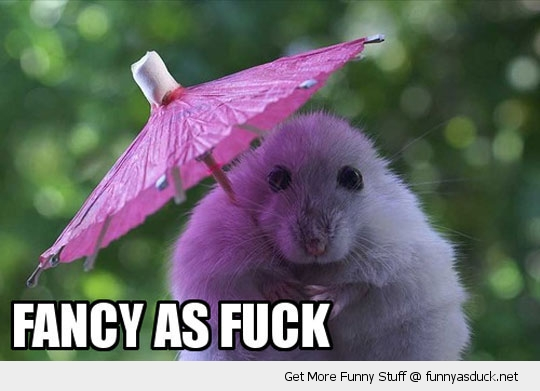 fancy as fuck hamster mouse umbrella cute animal funny pics pictures pic picture image photo images photos lol