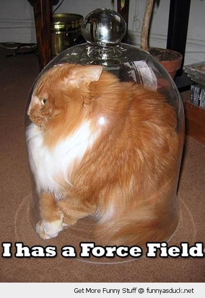 fat cat force field glass bowl bubble animal stuck funny pics pictures pic picture image photo images photos lol