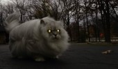 isn't final form fat evil cat lolcat animal glowing eyes funny pics pictures pic picture image photo images photos lol