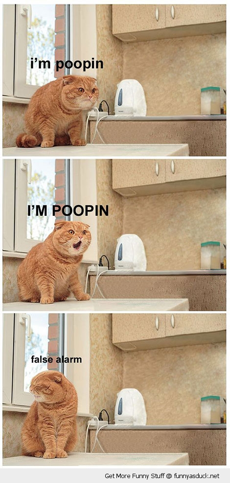 fat cat animal lolcat pooping table false alarm funny pics pictures pic picture image photo images photos lol