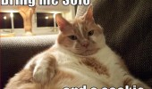 fat cat jabba han solo wookie star wars animal funny pics pictures pic picture image photo images photos lol