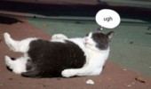 fat cat getting up fuck it lolcat animal funny pics pictures pic picture image photo images photos lol