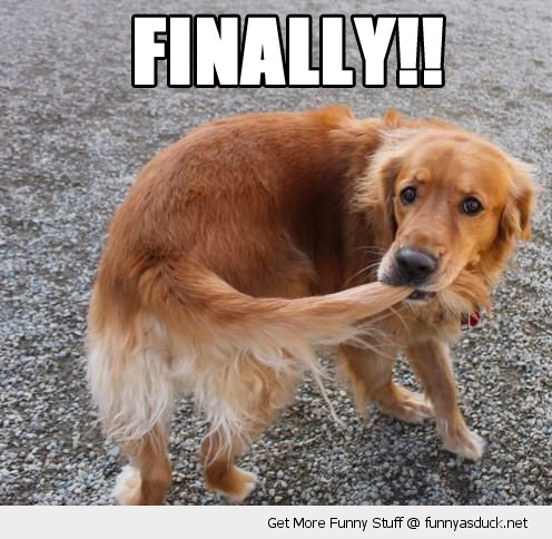 finally caught tail dog animal happy funny pics pictures pic picture image photo images photos lol