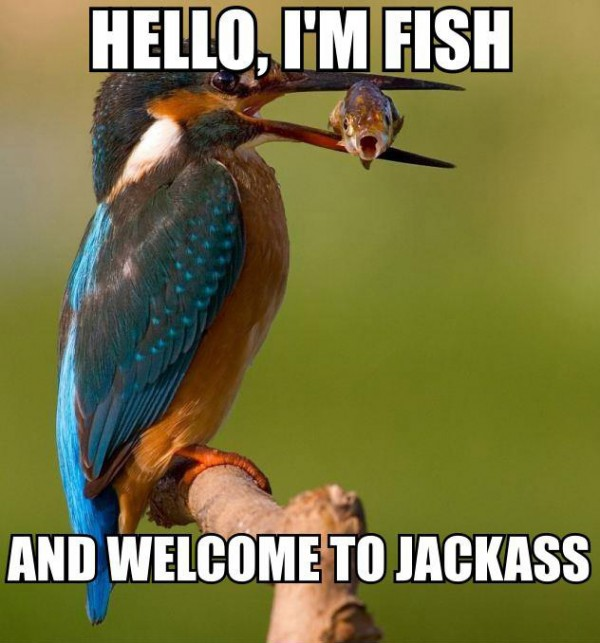 fish king fisher bird eating catch animal welcome jackass funny pics pictures pic picture image photo images photos lol