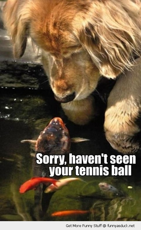 sorry fish talking dog tennis ball animal funny pics pictures pic picture image photo images photos lol