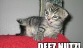 rude flashing kitten cat animal nuts cute funny pics pictures pic picture image photo images photos lol