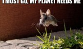 must go planet needs me flying jumping mouse animal funny pics pictures pic picture image photo images photos lol