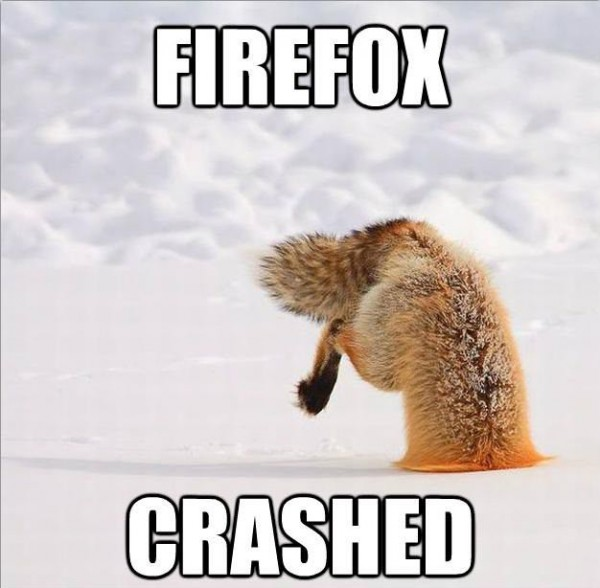 fox stuck head snow firefox crashed animal funny pics pictures pic picture image photo images photos lol