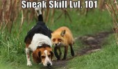 fox sneak dog hound skill level 101 hunt animal funny pics pictures pic picture image photo images photos lol