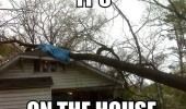 on the house tree pun crashed fell roof funny pics pictures pic picture image photo images photos lol