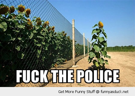 fuck the police sunflower outside fence nature plant funny pics pictures pic picture image photo images photos lol