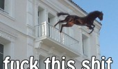 fuck this shit horse jumping building balcony animal funny pics pictures pic picture image photo images photos lol