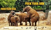 fuck yeah dad son elephants sex animals zoo funny pics pictures pic picture image photo images photos lol