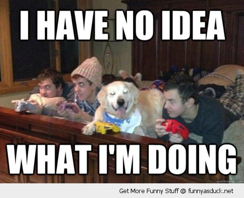 no idea doing gaming dog nintendo animal bed n64 funny pics pictures pic picture image photo images photos lol