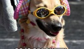 gay camp dog animal sunglasses straight spaghetti hot funny pics pictures pic picture image photo images photos lol