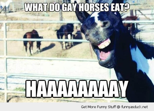 hay gay horse laughing eat animal smile animal funny pics pictures pic picture image photo images photos lol