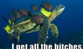 all the bitches sea turtle marine fish animals funny pics pictures pic picture image photo images photos lol