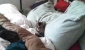 cat lolcat animal in bed get me another pillow stand there funny pics pictures pic picture image photo images photos lol