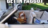 get in faggot dog driving car animal cute funny pics pictures pic picture image photo images photos lol