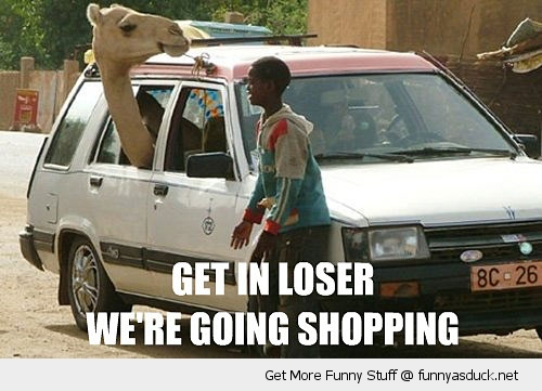 get in loser camel in car animal funny pics pictures pic picture image photo images photos lol