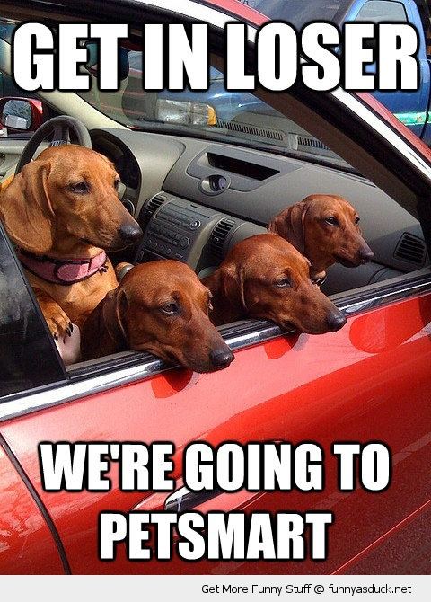 get in loser dogs in car window animals petsmart funny pics pictures pic picture image photo images photos lol