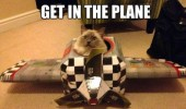 get in the plane cat lolcat animal toy explain funny pics pictures pic picture image photo images photos lol