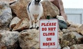 what goat rocks sign not cop do not climb funny pics pictures pic picture image photo images photos lol
