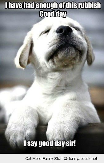 grumpy dog animal good day sir enough rubbish angry cute puppy funny pics pictures pic picture image photo images photos lol
