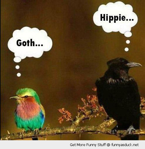 angry birds goth hippie animals funny pics pictures pic picture image photo images photos lol