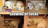 growing up sucks sleeping dog too big unit table animal cabinet funny pics pictures pic picture image photo images photos lol