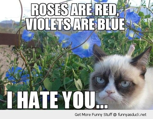 funny-grumpy-angry-cat-roses-red-violets-blue-hate-you-poem-pics.jpg